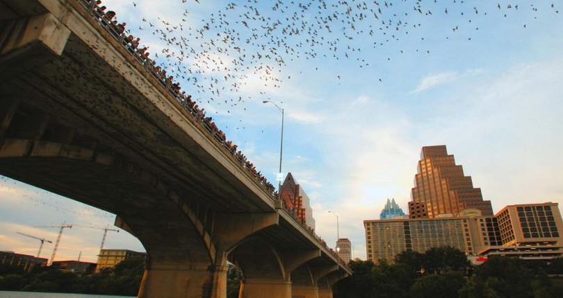 The Most Complete Guide to Watching the Bats in Austin